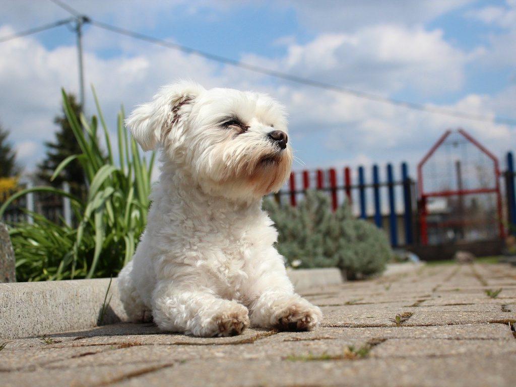 כלב שמח