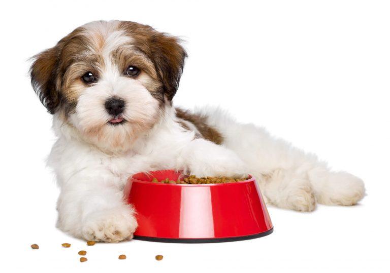 איך לבחור אוכל לכלב